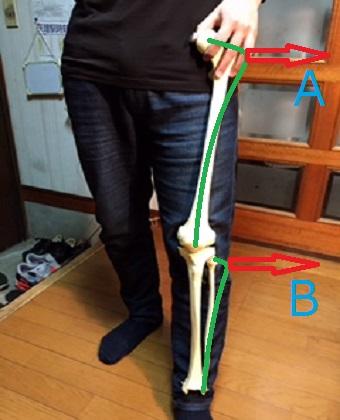脚と脚の骨格模型の画像